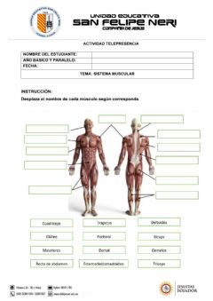 Interactive worksheet Sistema muscular