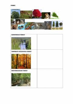 Interactive worksheet Forest ecosystems