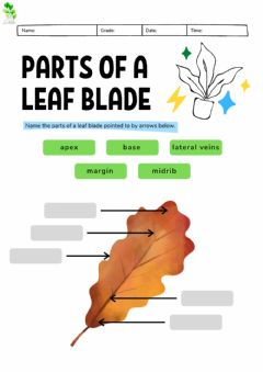 Interactive worksheet Montessori Lesson - Biology - Parts of a Leaf Blade