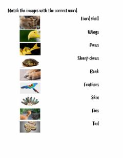 Interactive worksheet Animals' body parts and description