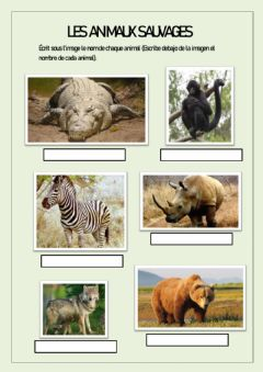 Interactive worksheet Animaux sauvages