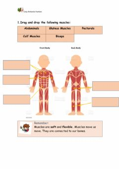 Ficha interactiva Muscles and joints