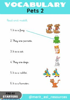 Interactive worksheet Pets - Read and match