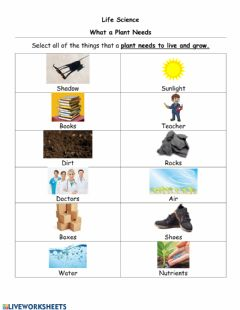 Interactive worksheet What a plant needs and parts of a plant
