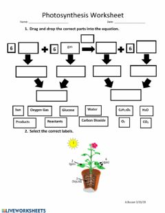 Interactive worksheet Photosynthesis Worksheet