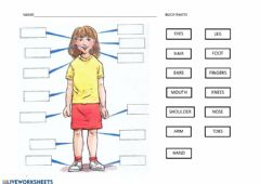 Interactive worksheet Label the body parts