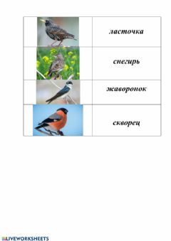 Interactive worksheet Птицы