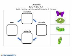 Ficha interactiva Butterfly Life Cycle