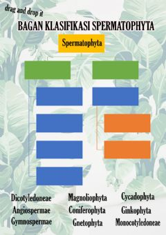 Interactive worksheet Classification of Spermatophyte