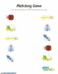 Interactive worksheet Insects - Matching