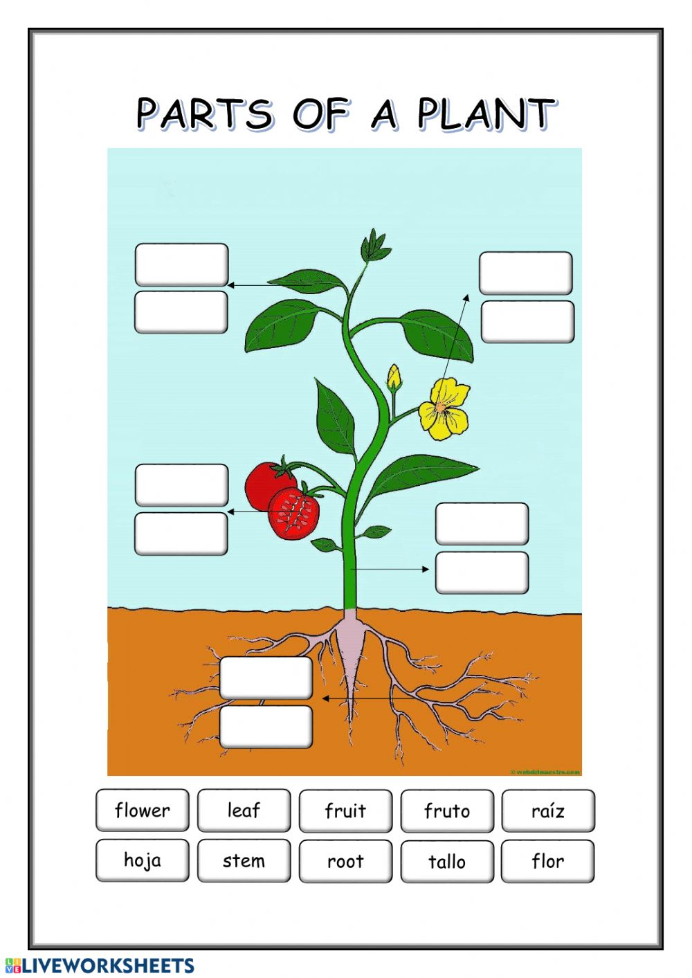 Parts of a plant interactive worksheet