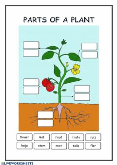 Interactive worksheet Parts of a plant