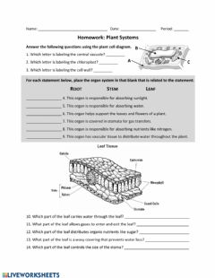 Interactive worksheet Plant Systems