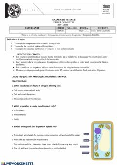 Interactive worksheet FIRST TERM SCIENCE EXAM 2020