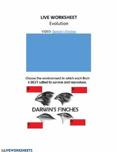 Interactive worksheet LIVE WORKSHEET: Evolution