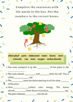 Interactive worksheet Plant nutrition