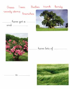 Interactive worksheet Trees, bushes and grass