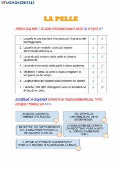 Interactive worksheet La pelle