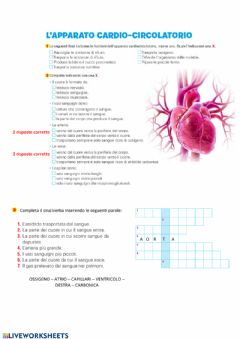 Interactive worksheet Apparato cardio-circolatorio con aiuti
