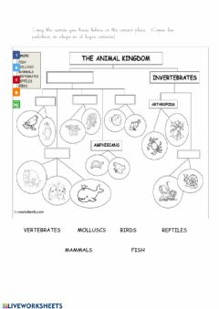 Interactive worksheet The animal kingdom
