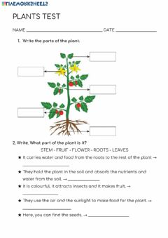 Interactive worksheet Plants-test