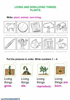 Interactive worksheet Living things and plants