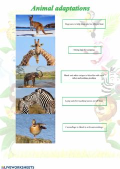 Ficha interactiva Animal adaptations