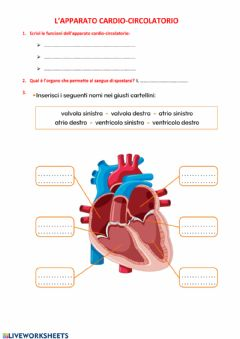 Interactive worksheet Prova 1 parte Apparato cardio-circolatorio