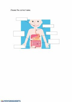 Interactive worksheet Digestive system
