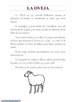 Interactive worksheet Animales:la oveja