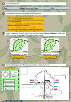 Interactive worksheet Plant activities 2