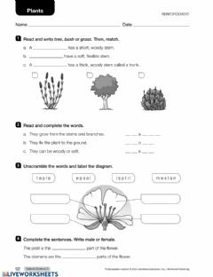 Interactive worksheet Plants Revision