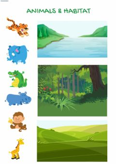 Interactive worksheet Animals & their habitat