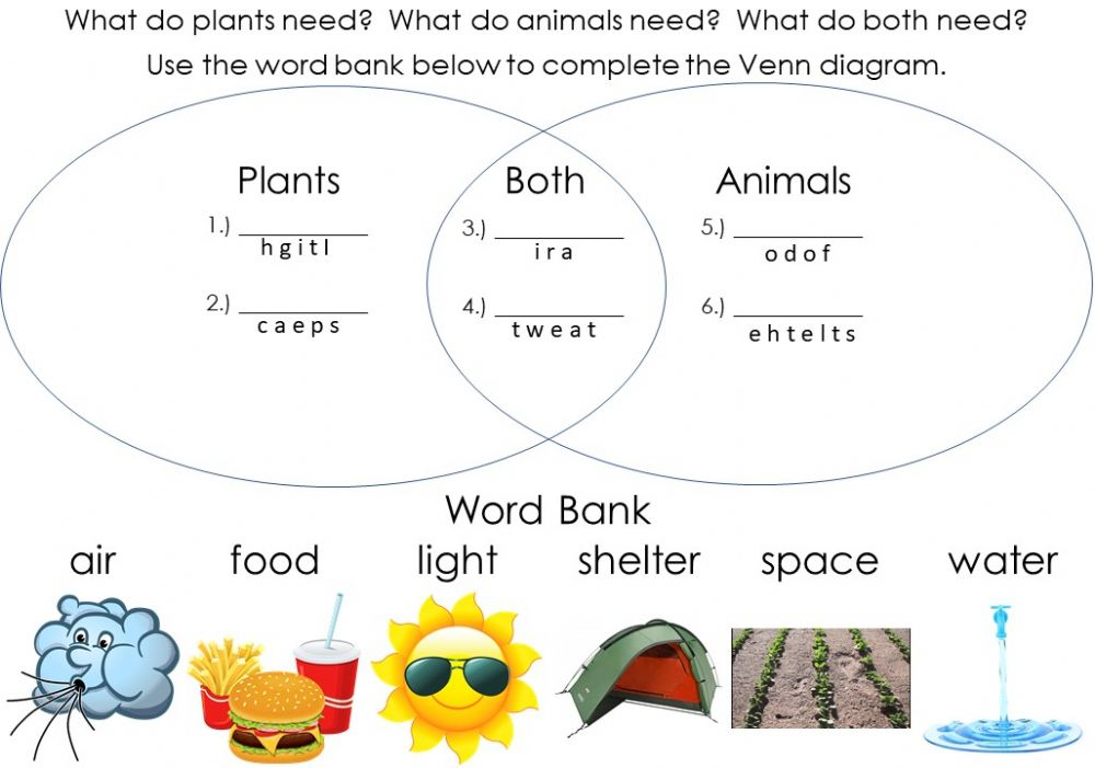 Needs Of Plants And Animals  Venn Diagram Worksheet