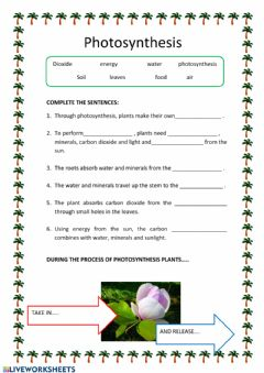 Interactive worksheet Photosynthesys
