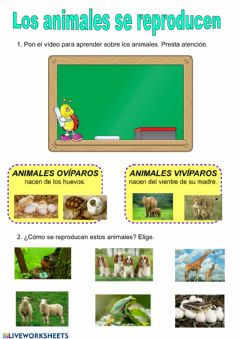 Interactive worksheet Reproducción en los animales