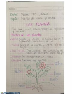 Interactive worksheet Las plantas
