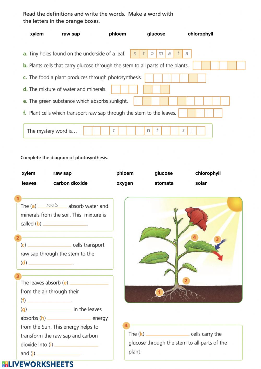 Photosynthesis online activity