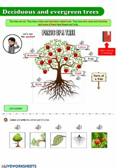 Interactive worksheet The plants II