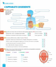 Interactive worksheet L'apparato digerente
