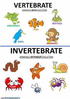 Interactive worksheet Vertebrate, invertebrate