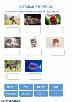 Interactive worksheet Aanimals