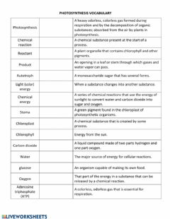 Interactive worksheet Photosynthesis Vocabulary