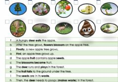 Interactive worksheet Seed Dispersal - Deer