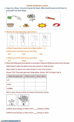 Interactive worksheet What plants need
