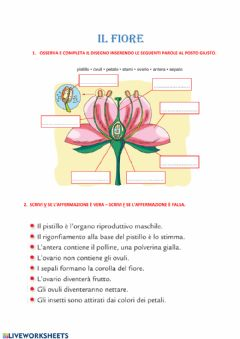 Interactive worksheet Il fiore