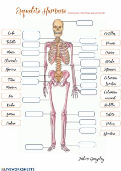 Interactive worksheet Esqueleto Humano