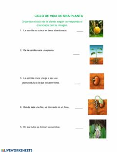 Interactive worksheet Ciclo de la olanta