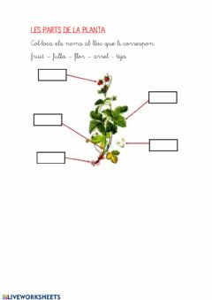 Interactive worksheet Parts de la planta