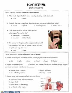 Interactive worksheet Body Systems